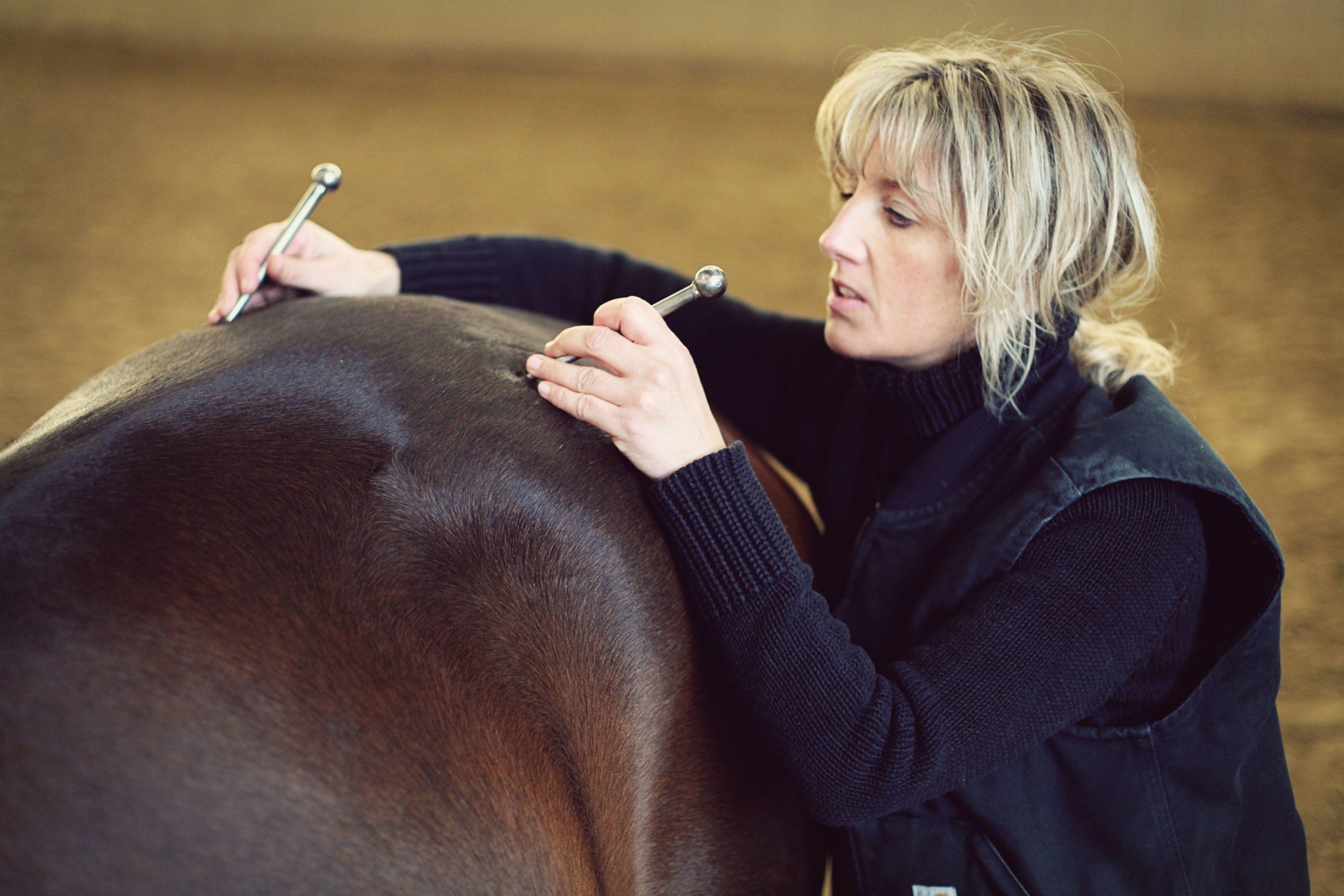 Pferdephysiotherapie-Zusammenhänge des Körpers verstehen